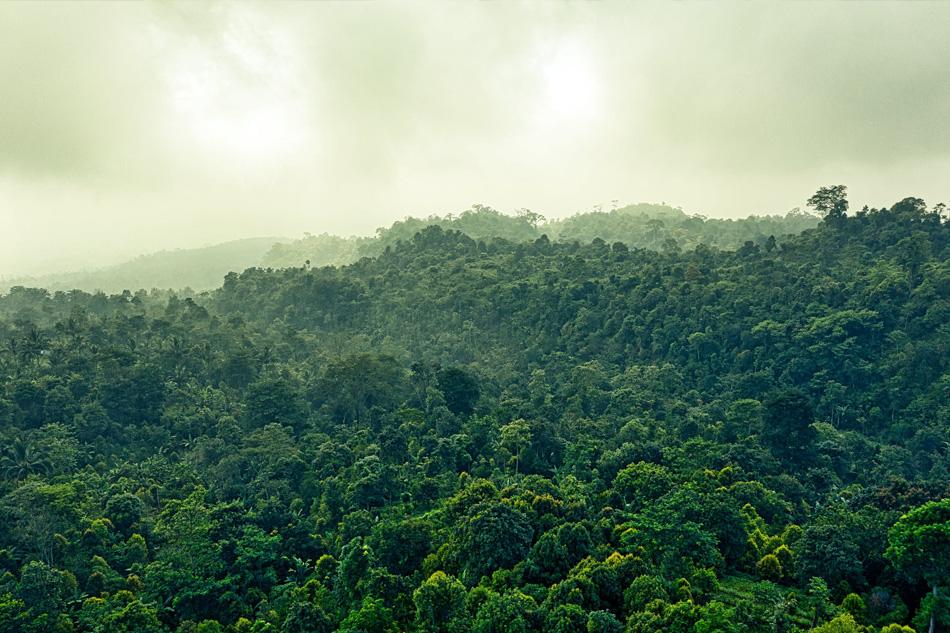Tropische Hölzer